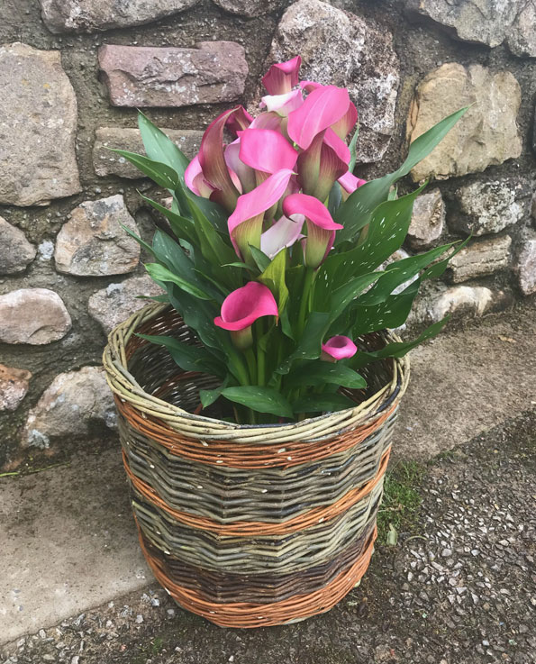 Willow Plant Pot Cover